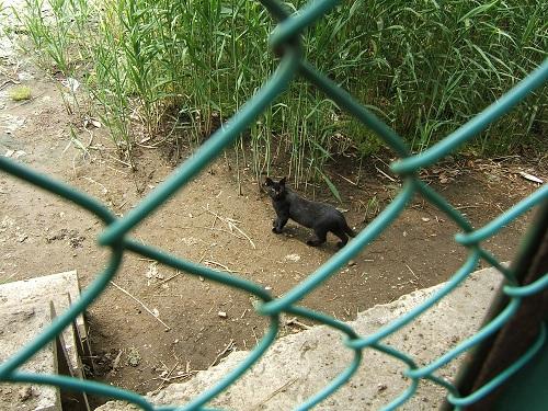 谷津干潟にいた黒猫_e0089232_19374784.jpg