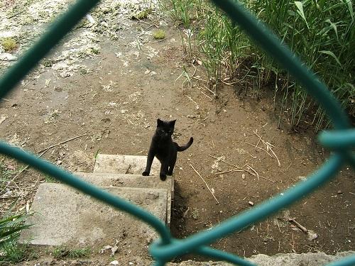 谷津干潟にいた黒猫_e0089232_19375368.jpg