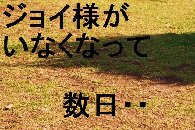 c0173042_1573772.jpg