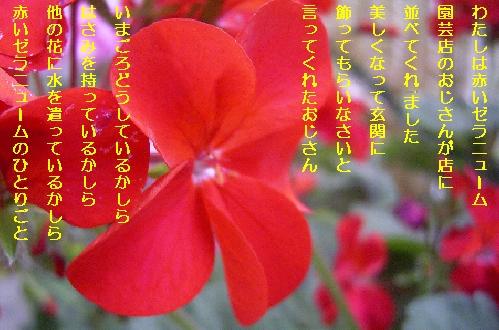 b0173244_1842833.jpg