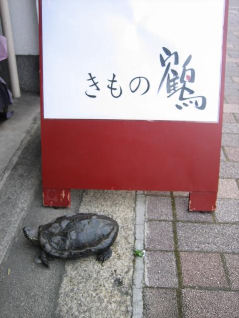 鶴のお店に亀がご来店!!_f0181251_1716334.jpg