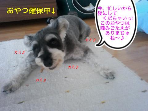 c0177261_1652424.jpg