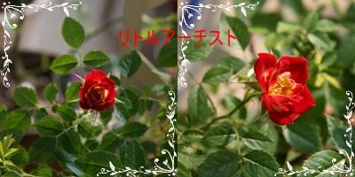 d0054461_19293858.jpg