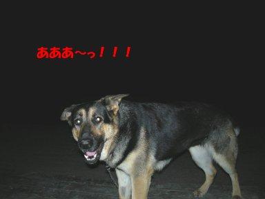 b0113663_973913.jpg