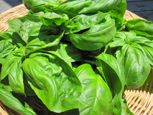 fresh Vegetables_f0073070_13584749.jpg