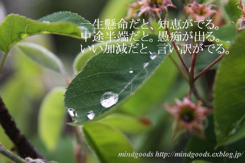 f0201170_22164052.jpg