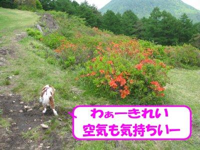 b0185323_15512987.jpg