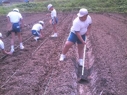 服間小学校5年生23名、大豆栽培にチャレンジ!_e0061225_1653561.jpg