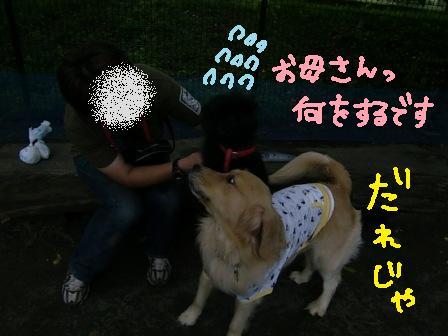 f0176830_16223832.jpg