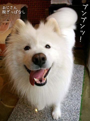キラキラビーム☆_c0062832_1691439.jpg