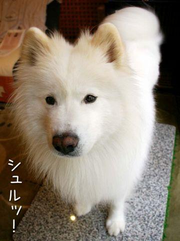 キラキラビーム☆_c0062832_1692478.jpg
