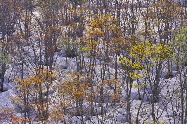 鳥海山 季節の凝縮_f0050534_7513733.jpg