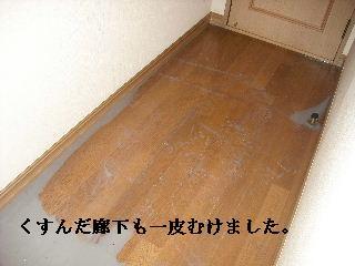 f0031037_1929943.jpg