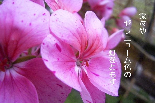 b0173244_19471593.jpg