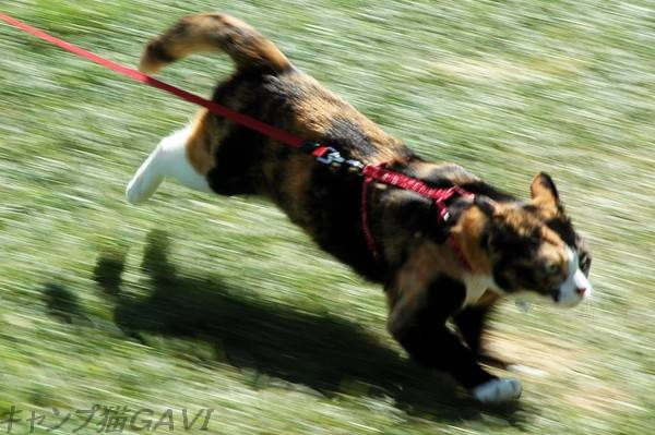 走ってるときの猫のひげ_b0178444_9312343.jpg