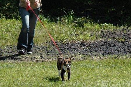 走ってるときの猫のひげ_b0178444_935964.jpg