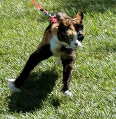 走ってるときの猫のひげ_b0178444_9373137.jpg