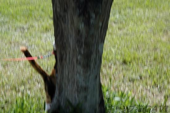 走ってるときの猫のひげ_b0178444_9424110.jpg