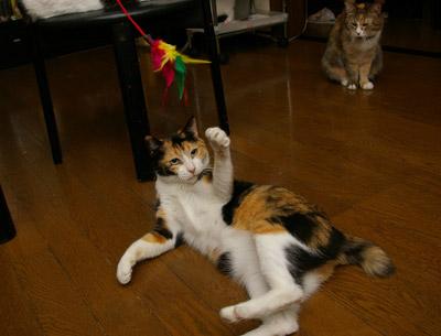 猫じゃらし教室_a0028451_1321347.jpg