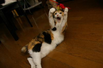 猫じゃらし教室_a0028451_1322360.jpg