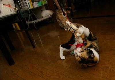 猫じゃらし教室_a0028451_1332192.jpg
