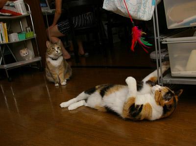 猫じゃらし教室_a0028451_1333352.jpg