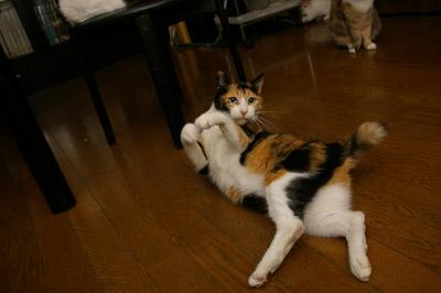 猫じゃらし教室_a0028451_133750.jpg