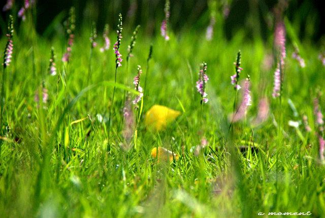 ねじ花の森にようこそ_f0147895_22541492.jpg