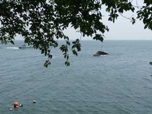 琵琶湖の沖島へ行ってきました!_c0093196_11542915.jpg