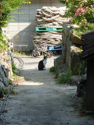 琵琶湖の沖島へ行ってきました!_c0093196_1157070.jpg