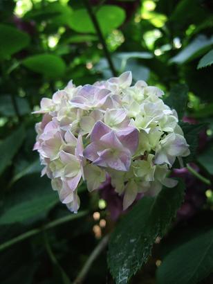 季節の花_f0085219_22115596.jpg