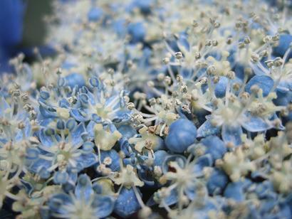 季節の花_f0085219_2215928.jpg