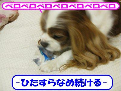 b0185323_1740053.jpg
