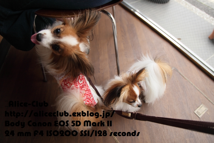 a0027126_15415941.jpg