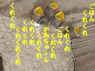 b0151748_2158834.jpg