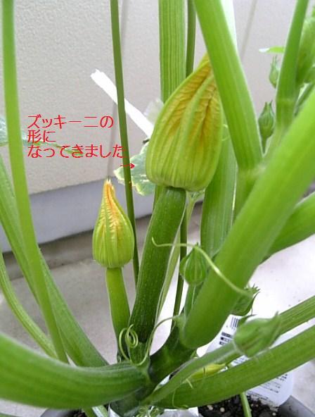 c0115560_2003590.jpg