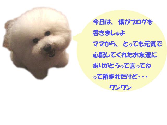 b0060071_2332173.jpg
