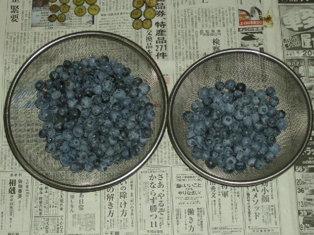 チャンドラー、ブルーレイ、ブルーゴールドの果肉の色_f0018078_16103138.jpg