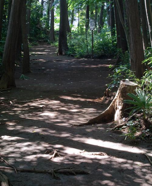 ライカをつれて森へ_c0002682_15551876.jpg