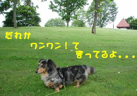 f0195891_17212740.jpg