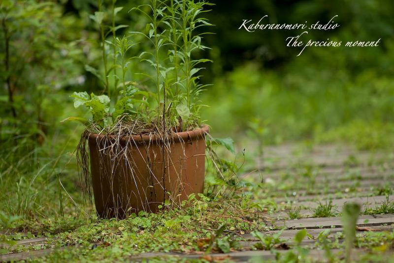09/6/21   雨上がり庭の畑_c0137403_16235032.jpg