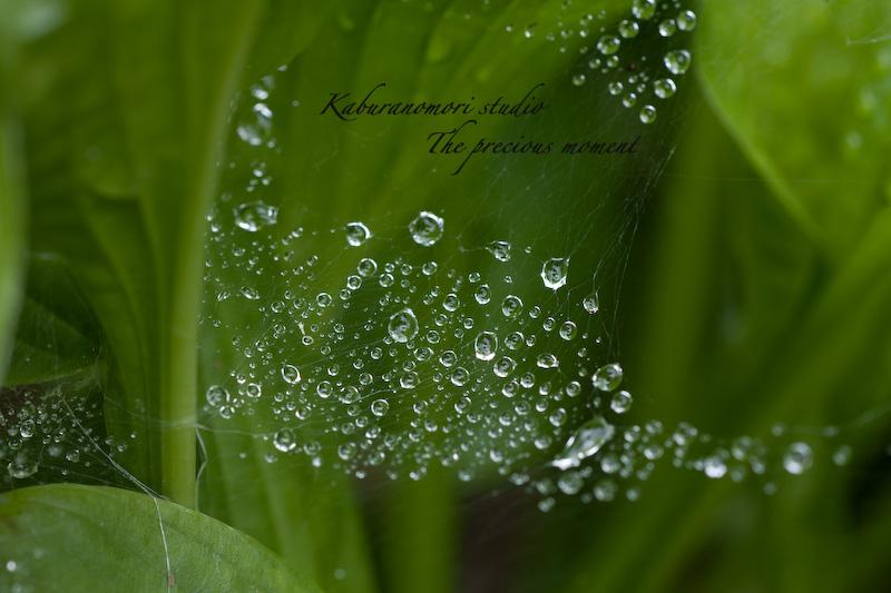 09/6/21   雨上がり庭の畑_c0137403_21215413.jpg