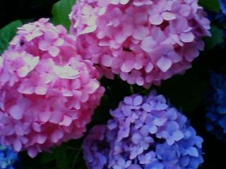 一松海岸_f0164003_19133061.jpg