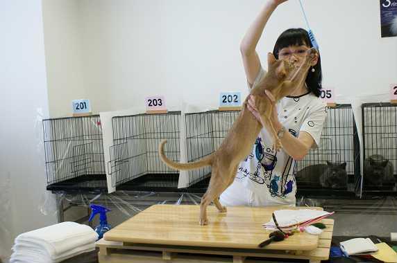 博多@TICA  CAT SHOW 続き_e0033609_12113966.jpg