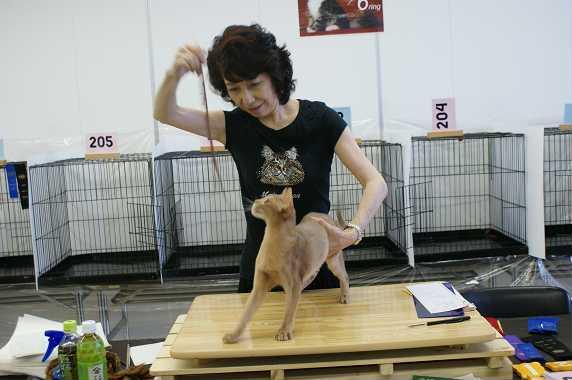 博多@TICA  CAT SHOW 続き_e0033609_12123450.jpg