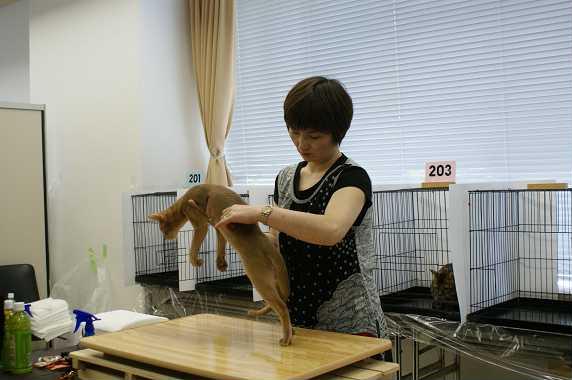 博多@TICA  CAT SHOW 続き_e0033609_12172813.jpg