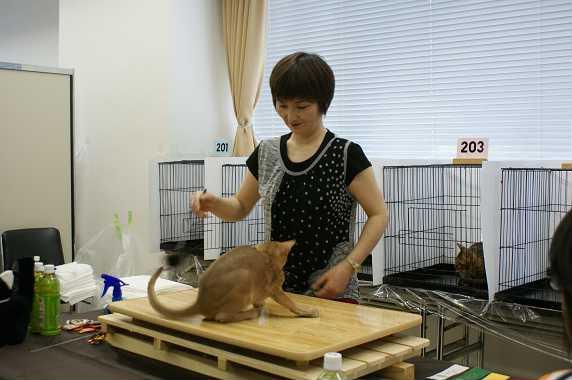 博多@TICA  CAT SHOW 続き_e0033609_1217397.jpg