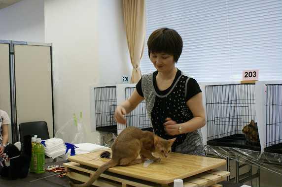博多@TICA  CAT SHOW 続き_e0033609_12174868.jpg