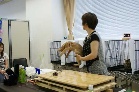 博多@TICA  CAT SHOW 続き_e0033609_1218266.jpg