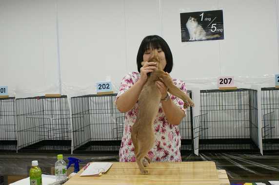 博多@TICA  CAT SHOW 続き_e0033609_12224541.jpg